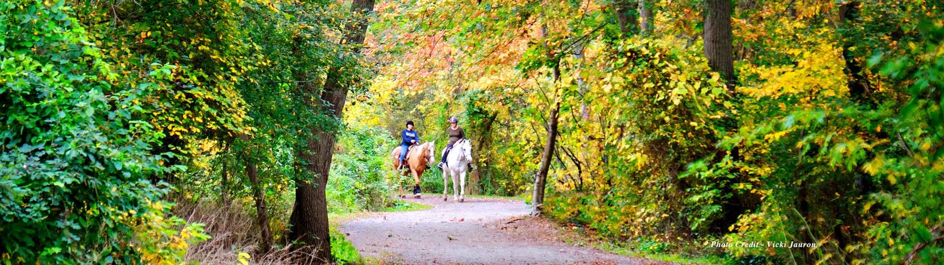 Southards Horses